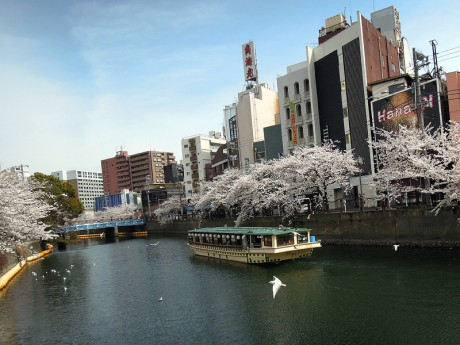 桜と屋形船